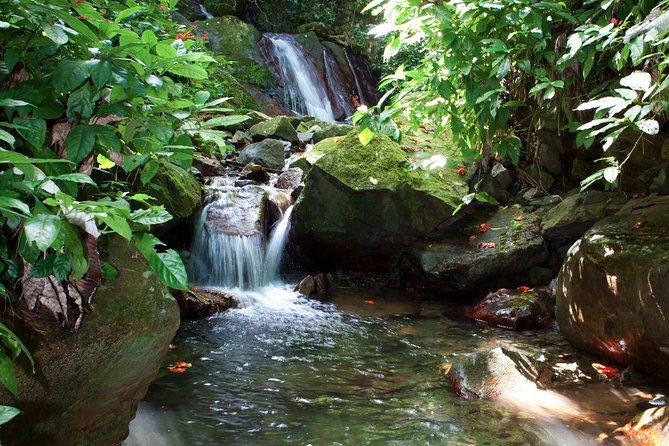 Full-Day Zipline and Waterfall Rappelling Adventure Near San Juan, San Juan, PUERTO RICO