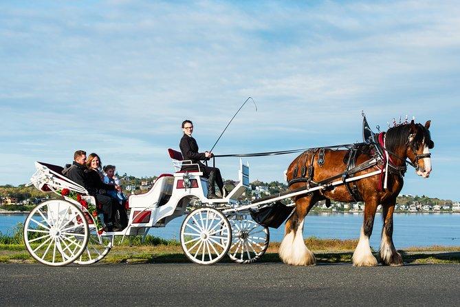 MÁS FOTOS, Premier Horse-Drawn Carriage Tour