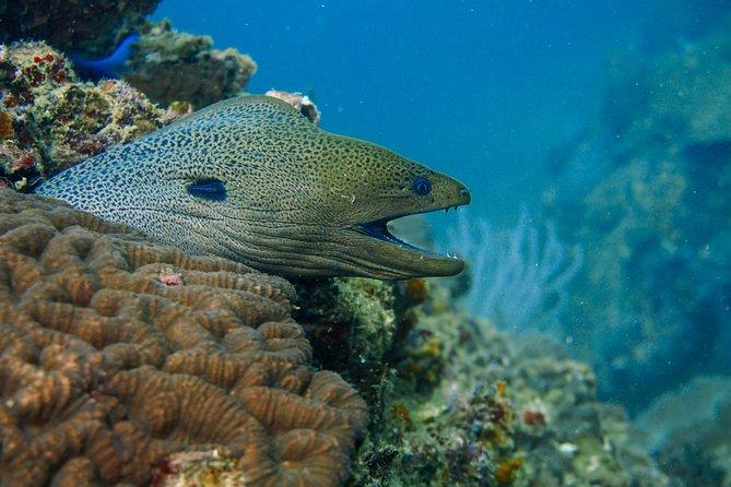 Kled Gaeow Wreck Diving, Ko Phi Phi Don, Tailândia