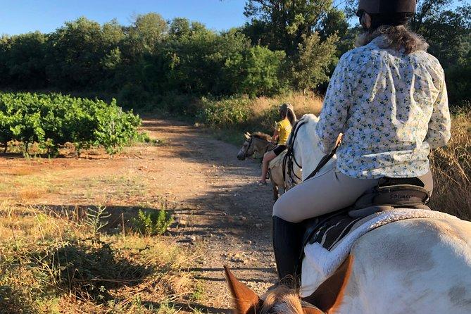 Horse riding in the vineyards, Saint-Tropez, FRANCIA