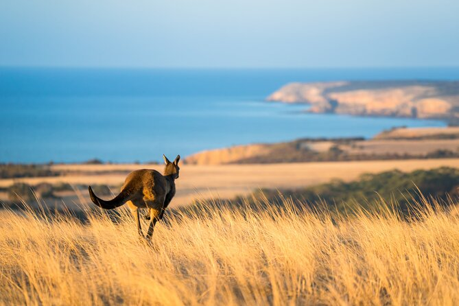 Enjoy the best of Kangaroo Island on this 2-day all-inclusive Kangaroo Island Safari. Travel with an experienced local guide who will provide insight into the history of the island and highlight the environmental recovery after the bushfires. This is a must-do Kangaroo Island Safari where you can immerse yourself in authentic Kangaroo Island wildlife, sights, and experiences.