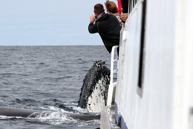 SALE! Whale Watching Tour Gold Coast, Gold Coast, Austrália
