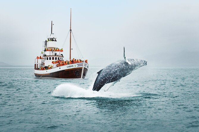 On this tour, you will get a unique chance to experience the breathtakingly gorgeous nature of Ísafjarðardjúp bay from the sea. Learn the history of the bay while getting to the areas where wildlife is ample, enjoy the fresh air, and the magnificent scenery of one of Iceland's most distant regions.