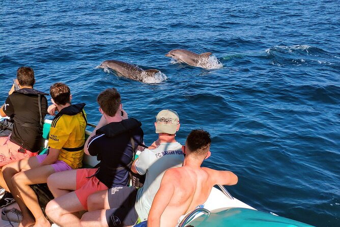 Meet us at the Vilamoura Marina, office 21, or get picked-up (included) from Albufeira or other places nearby, to enjoy this amazing trip!<br><br>Why choose us:<br><br>• Medium sized boat, more conformable, roomy, free to walk but small enough to enter the caves<br>• Included Pick-up service<br>• Chance to see Dolphins<br>• Enter the famous Benagil Cave<br>• Swimming in the Ocean<br>• Take amazing photos of the Coast<br><br>Once aboard our boat, we will head out to sea along the coast. You will have the opportunity to take amazing photos of the coast and beaches.<br><br>Once we arrive to Benagil the caves tour begins. Our boat is small enough to get inside all the important caves, so changing boats is not necessary. <br><br>After the Caves tour we have a stop for swimming.<br><br>During any part of the trip it's possible to find dolphins but as they are wild animals it is not guaranteed.<br><br>Lastly we will head back to Vilamoura.