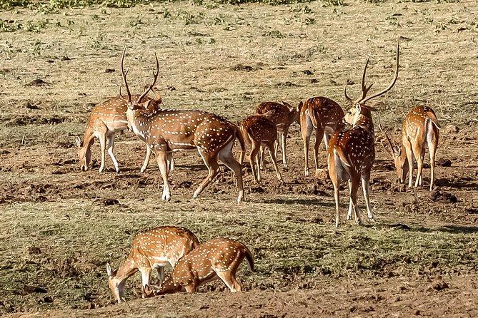 Udawalawe National Park Safari from Galle, Galle, SRI LANKA