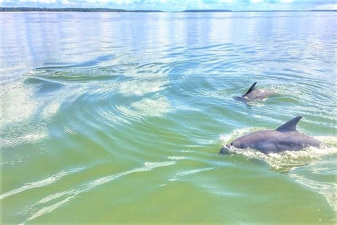 Experience this 1.5-hour tour in the waters around Hilton Head Island, choosing from multiple departures throughout the day. Enjoy the sights of the waterways and your professional guide's narration as you seek out incredible friendly and playful dolphins. Bring the whole family on this kid friendly tour.