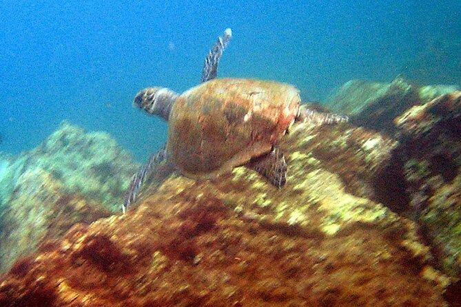 Snorkeling tour along the coast, La Palma, ESPAÑA