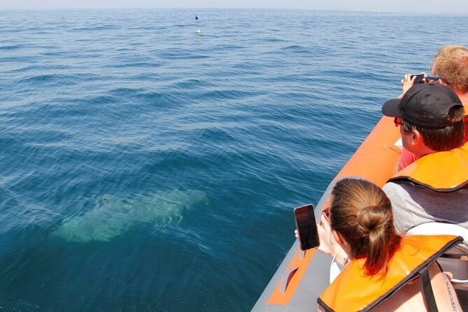 Dolphin and Whale Watching in Lagos, Lagos, PORTUGAL