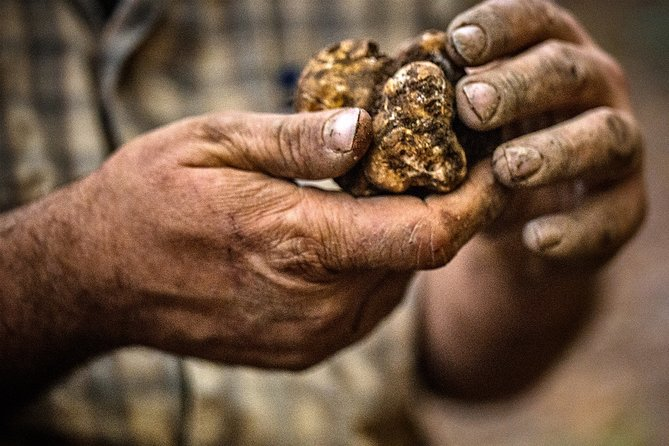 Truffle hunting starting from Alba, Langhe-Roero y Monferrato, Itália