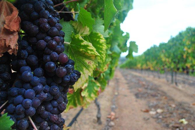Winelands Tour, Ciudad del Cabo, SUDAFRICA