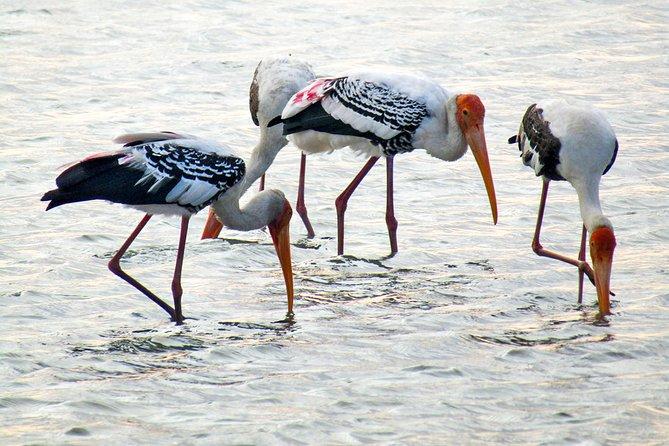 MORE PHOTOS, Birdwatching in Jaffna Lagoon