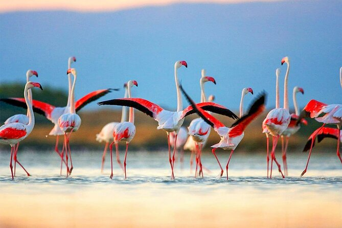 MORE PHOTOS, Birdwatching in Chundikulam National Park