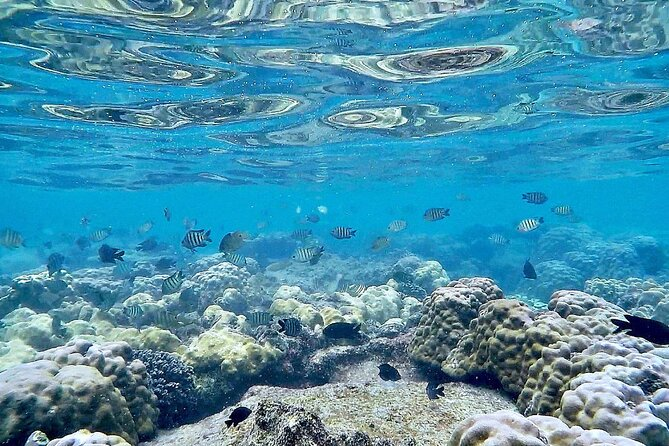 MÁS FOTOS, Phu Quoc Snorkeling and fishing to the North full day tour