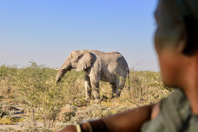 MORE PHOTOS, 9 Day Canyons, Dunes & Wildlife Camping and Lodge Safari