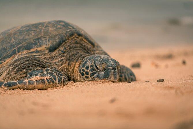 Premium Tour: Turtle Nesting Tour, Tamarindo, COSTA RICA