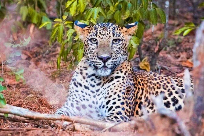 Yala National Park Leopard Safari, Parque Nacional Yala, SRI LANKA