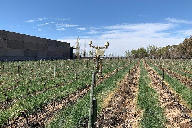 Private tour: Mendoza winery with driver and guide, Mendoza, ARGENTINA