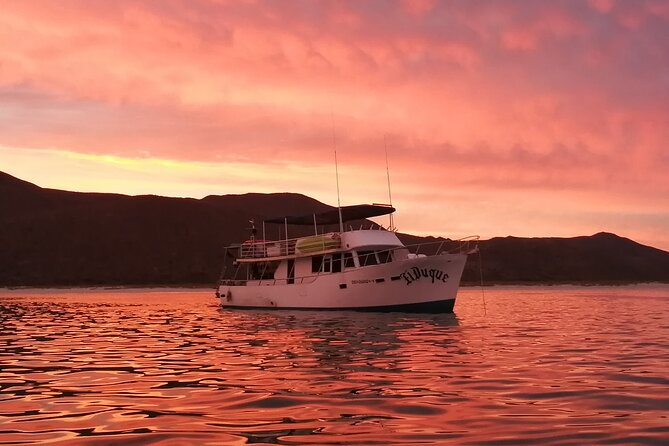 This tour explores the beautiful area around the mogote and the Bay of La Paz and allows you to experience the city from the water. Our boat is a large, comfortable cruising vessel with plenty of space inside and outside to enjoy the views. We will provide delicious snacks and appetizers during the tour as well as drinks.