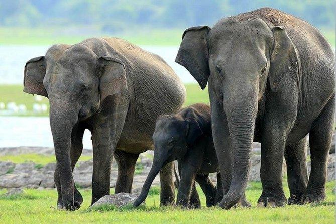 Minneriya National Park Safari From Sigiriya, Sigiriya, Sri Lanka