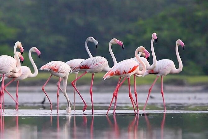 • You will pick up from your hotel at 05:30 am in morning or 02:30 pm in evening <br> • Enjoy wildlife safari in Gal Oya national park <br> • Enjoy king coconut refreshments <br> • Drop off
