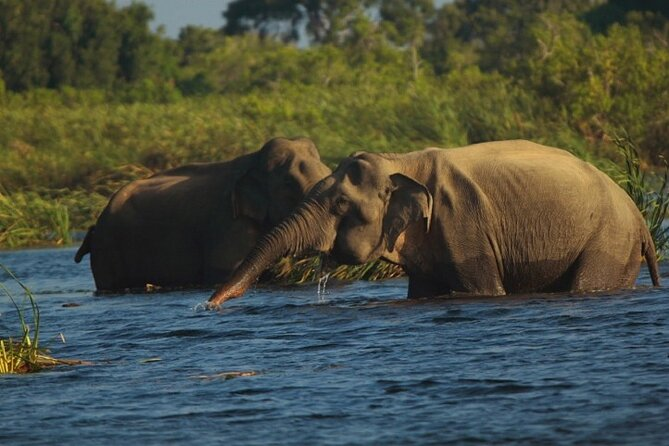 Gal Oya National Park Safari from Pasikudha : Private Tour, Batticaloa, Sri Lanka
