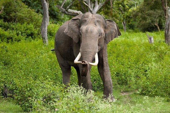 MORE PHOTOS, Gal Oya National Park Safari from Pasikudha : Private Tour