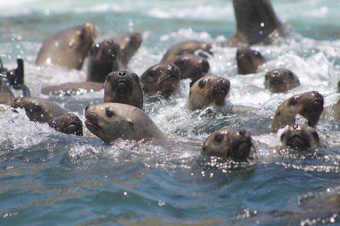Visit the Sea Lions in Palomino Islands, in Lima Peru, Lima, PERU