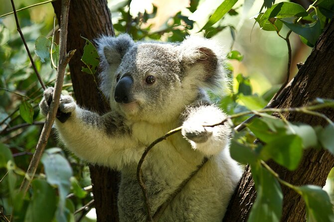 Join us for a tour through Mt.Tamborine's exciting scenery as we venture through the lush sub-tropical rainforest in your own private 4WD vehicle.<br><br>Come say hello to the native wildlife (yes, koalas), raise a glass at Heritage Winery Reds and enjoy a tea break in the midst of the Hinterland.<br><br>Over the course of five hours, our local guide will take you under his knowledgeable wings and provide precious insights into the indigenous way of life, local flora & fauna and the local fascinating history.