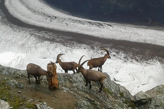 Self-Guided Tour: Zermatt Alpine Village Matterhorn Area plus Mt. Gornergrat, Lucerna, Suíça