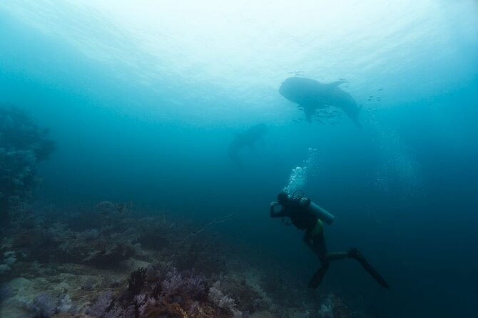 ADVANCED ADVENTURER<br><br>The Advanced Adventure is a taster into SSI Specialities to find out which activities you enjoy in Diving. Going deeper, taking photo or perfecting your buoyancy.<br>