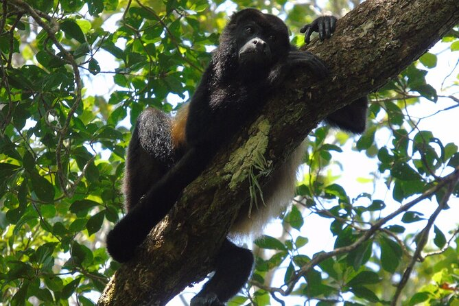 Cruiseline Excursion Colon: Rainforest, San Lorenzo Fort and Canal Expansion, ,