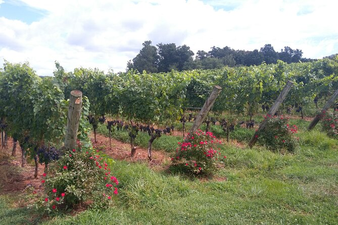 A very comfortable and stylistic a tour and tasting some of Virginia's finest vineyards and wines. <br><br>It's very private and enjoyable for couple looking for an intimate getaway, a small group celebrating a special occasion, a bridal party, or a business team looking for a change of scene. You are making the right choice to experience the natural beauty of Mountains while driving to one of the best winery in historic Charlottesville. It is an exciting time of touring and wine tasting. Your vehicle type will depend on your group size.<br>