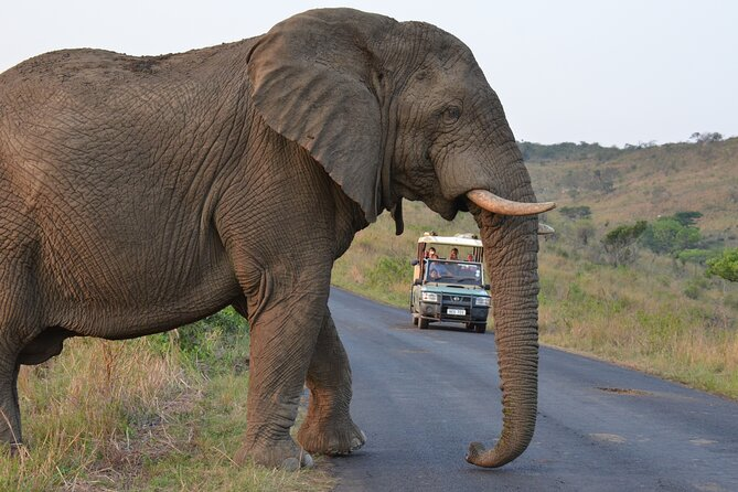 On this full day tour you will visit Hluhluwe Imfolozi Game Park & DumaZulu Cultural Village.The tour first starts at Hluhluwe Imfolozi for a day, there you will experience a 4 hour open vehicle game drive exploring South Africa's oldest nature reserve. The reserve is home to a diverse range of wild life including the BIG five. The tour then moves to the DumaZulu Cultural Village, South Africa's largest Cultural Villagewhich offers a guided tour about Zulu Culture and traditions.