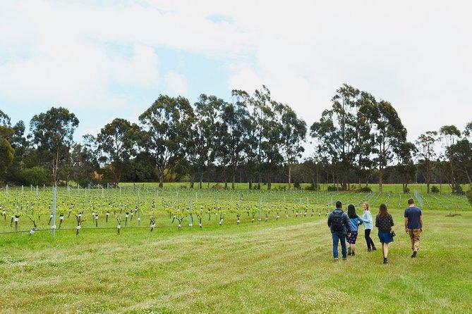 Organic Vineyard/Farm Tour, Busselton, AUSTRALIA