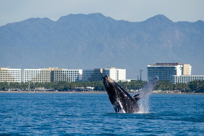 From November to April the humpback whales visit the Bay to give birth and nurse their calves. On this sightseeing cruise, you will sail in the seato watch them. Your tour also includes unlimited drinks and a buffet lunch.
