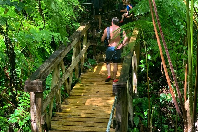 Half-Day Rainforest Nature Walk and River Swimming, Luquillo, PUERTO RICO