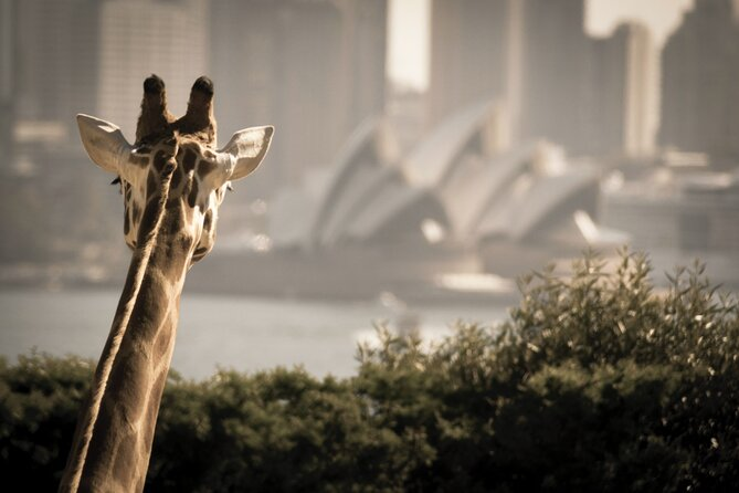 Enjoy the freedom of a 2-Day Hop On Hop Off cruise pass allowing you to visit up to 5 famous harbourside precincts, along with entry to Taronga Zoo and Sky Safari Gondola.<br><br>Cruise pass valid for two consecutive days, and Zoo entry valid on one day.