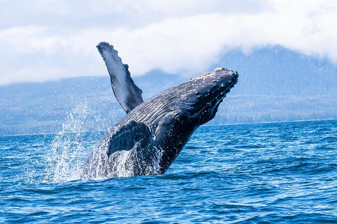 Now booking for summer 2020<br><br>Enjoy a (2) two-hour whale watching & wildlife tour off the coast of Baranof Island on a comfortable boat closed cabin boat built for Alaska and open aft viewing area with an experienced local captain. Southeast Alaska is a summer home for Humpback whales, Minke whales, and Gray whales. as well as stellar sea lions, sea otters and seals