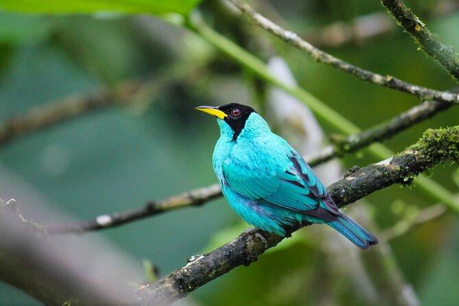 MÁS FOTOS, Birdwatching Tour in Via Sigsig,Chiguinda from Cuenca