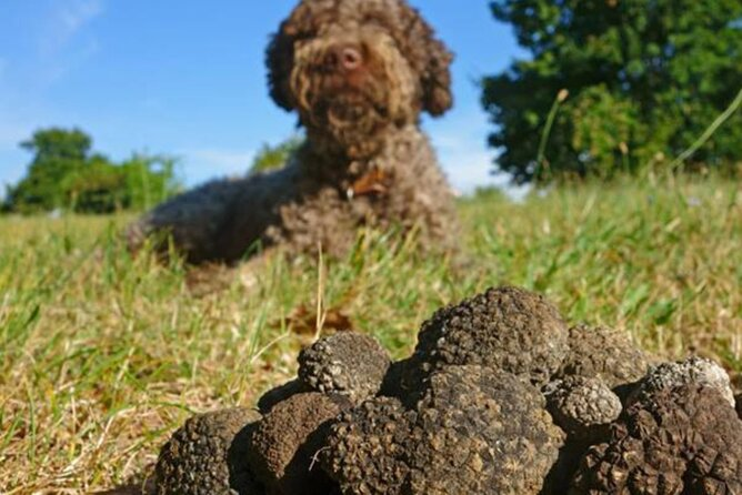 Private Traditional Truffle Hunting in the Woods with a dog, Parma, ITALIA