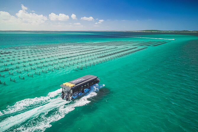 MAIS FOTOS, Experience Coffin Bay Short and Sweet Oyster Farm Tour