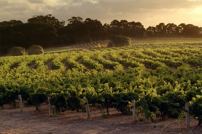 Margaret River Wineries, Caves, Ocean and Karri - Air & Ground Tour, Perth, AUSTRALIA