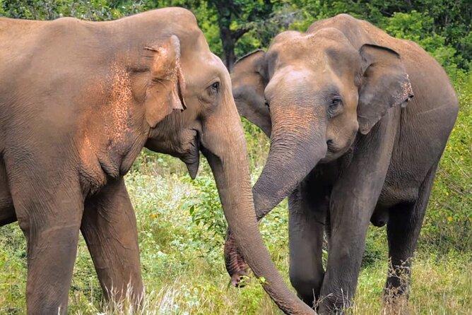 MORE PHOTOS, Sri Lanka 7 Days Sightseeing Tour Package