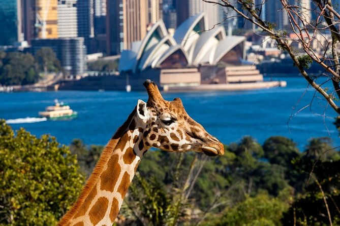 Get an up-close look at the animals of the world at Taronga Zoo Sydney — the zoo with a view! Situated on the foreshore of Sydney's magnificent harbor, Taronga Zoo Sydney has something for animal-lovers of all ages. This entry ticket provides general admission to the zoo, including the Sky Safari cable car. If you're interested in seeing or learning about more of the wildlife. Activities such as keeper presentations,Seals for the Wild and QBE Free Flight Bird Show are included in your ticket. A range of animal encounters can be booked on arrival at an additional cost.