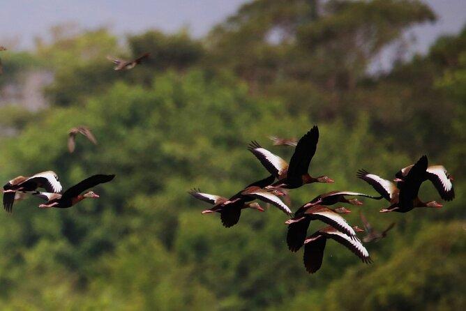 MÁS FOTOS, Aventura Observación de Aves en la Reserva Ecológica La Mancha