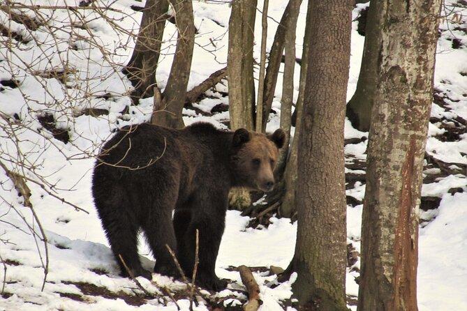 MÁS FOTOS, Bear watching experience near Brasov