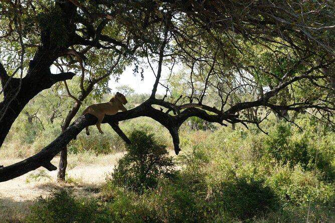MÁS FOTOS, Day Trip Selous Safari Tour from Zanzibar