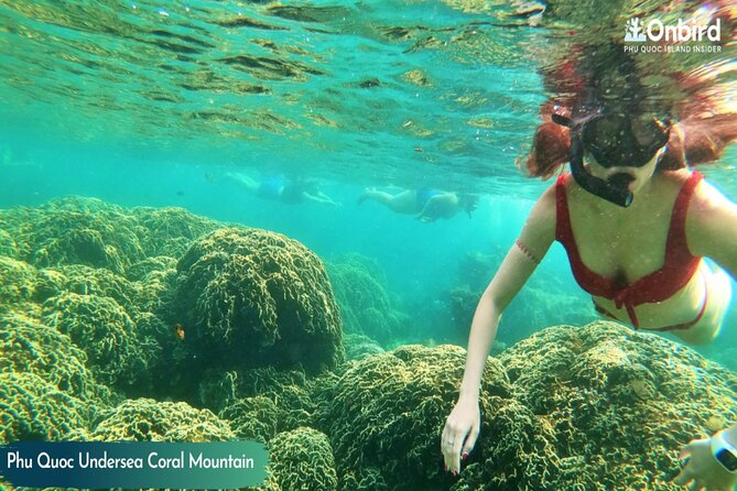 MÁS FOTOS, PRIVATE-Snorkelling at Coral Mountain & U-Turn reef in the early morning