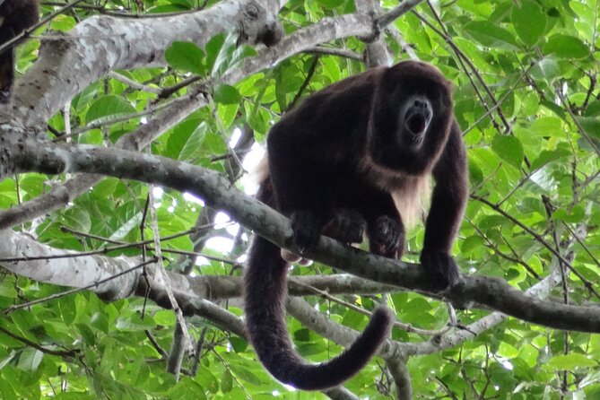 MÁS FOTOS, Full Day: Churute Forests & Cocoa Farm Tour (Departure from Guayaquil)