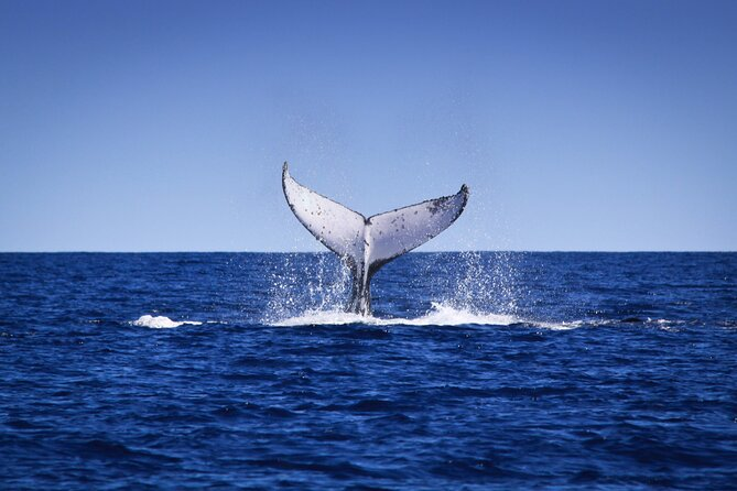 MAIS FOTOS, 4-Hour Whale Watching Sunset Cruise in Broome